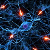 Know brain science
